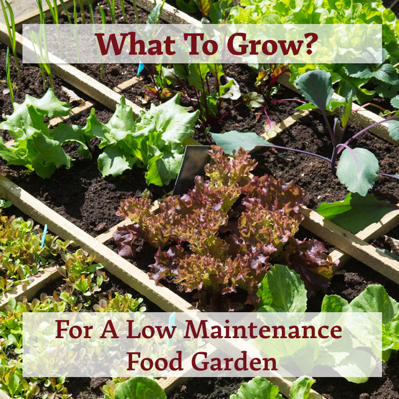 What Fruits & Vegetables To Grow For A Low Maintenance
