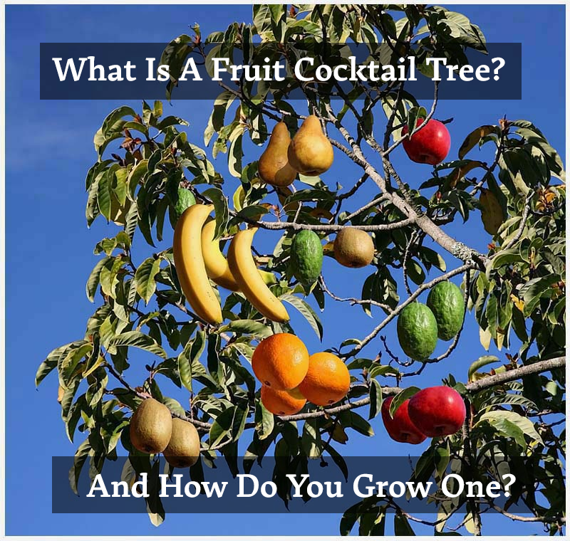 What Is A Fruit Cocktail Tree And How Do You Grow One