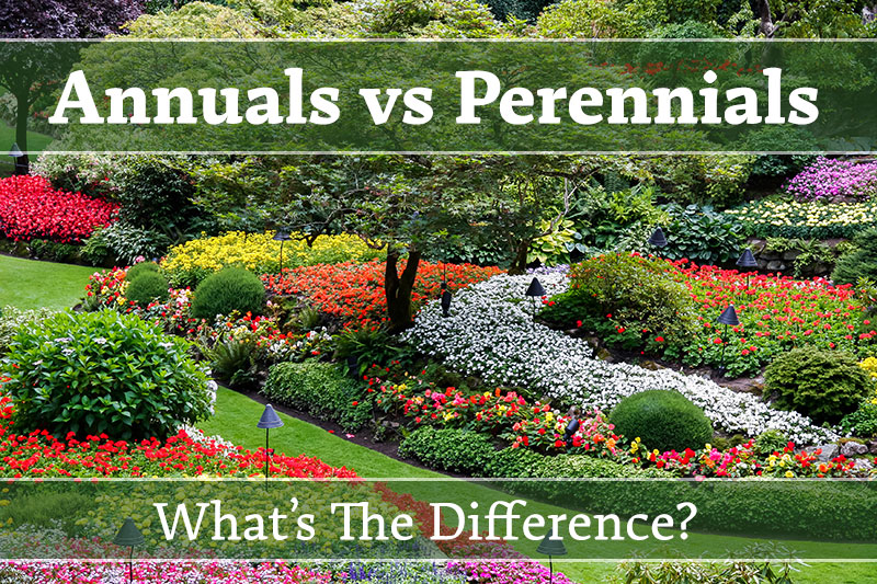 What Is The Difference Between Annual Vs Perennial Flowers Plants