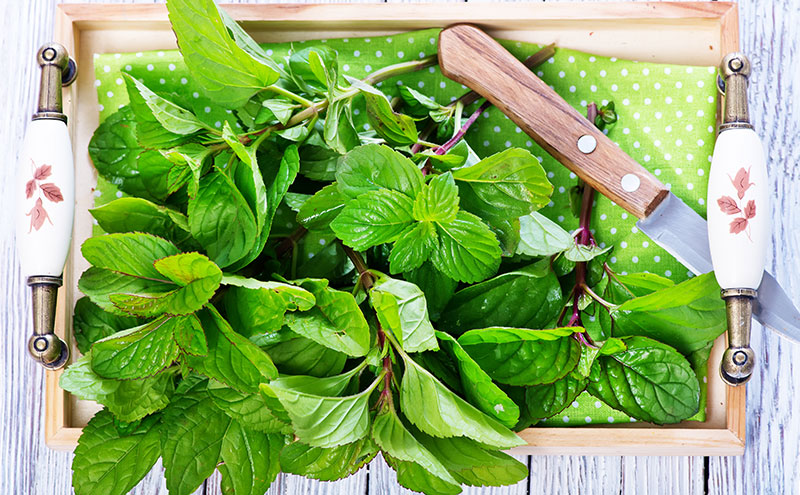 How To Grow And Care For Mint Plants Indoors