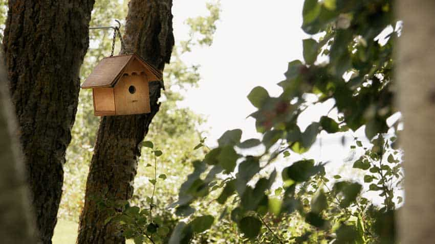 12 Simple DIY Bird House Plans – Easy To Build From One Board